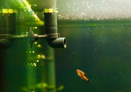 4 verschiedene Filtertypen für Aquarien