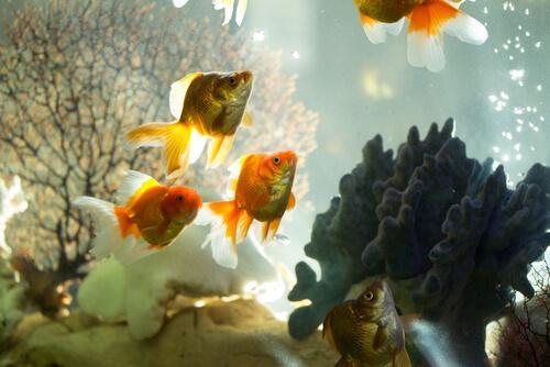 Verschiedene Filtertypen für Aquarien unterstützen den Stickstoffkreislauf.