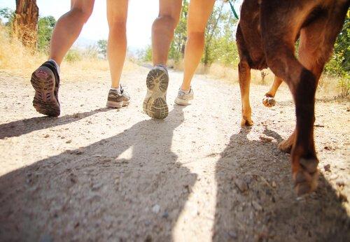 Warum Hunde uns hinterher laufen: Spaziergang