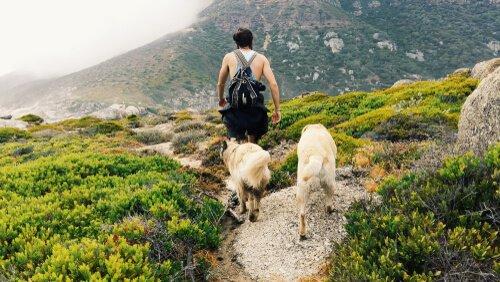 Warum Hunde uns hinterherlaufen: Wanderung