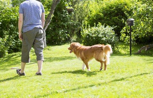 Warum Hunde uns hinterherlaufen