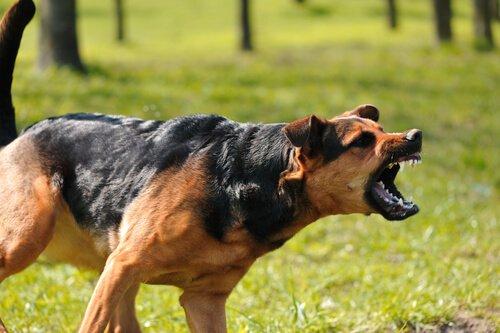 Was tun, wenn ein Hund angreift?