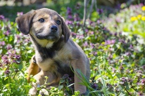Zecken beim Hund können Juckreiz auslösen