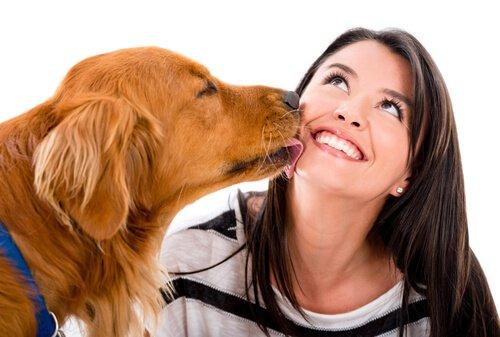 So drückt dein Hund seine Zuneigung aus