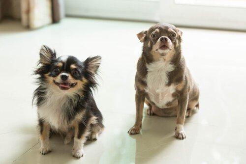 Hunde leisten sich gegenseitig Gesellschaft