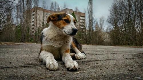 Tschernobyl-Hund-Strasse