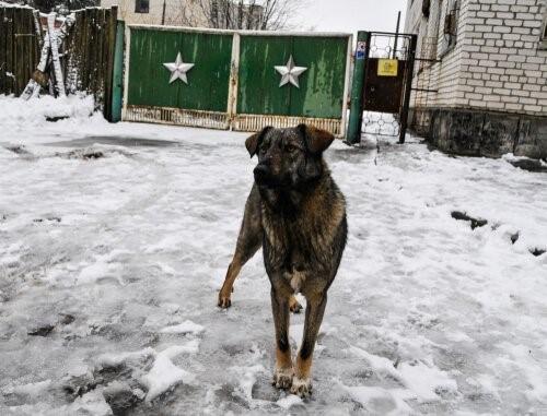 Tschernobyl-Hund