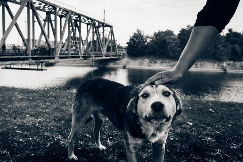 Die letzten Hunde von Tschernobyl