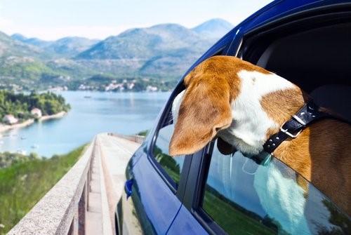 Ostern: 5 Urlaubsziele für dich und deinen Hund