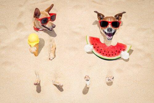 Appetitlosigkeit bei Hunden wegen Hitze: was kann man tun?