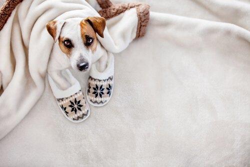 Behandlung von Hypothermie bei Hunden