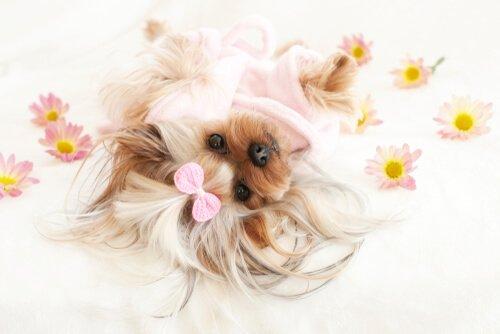 Blütentherapie für Hunde bei Depression