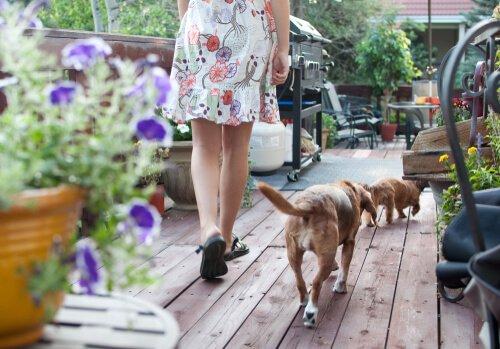 Blütentherapie für Hunde bei Stress
