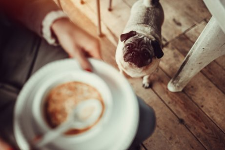 Deinem Hund Suppe ohne Salz geben