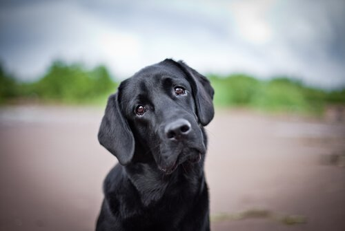 Depression bei Hunden