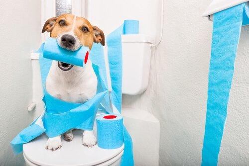 Durchfall bei älteren Hunden - was tun?