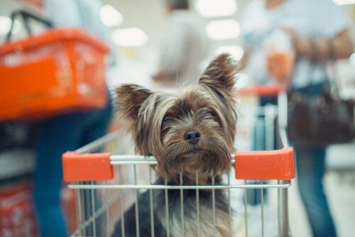 Kann man den Einkauf mit dem Hund erledigen?