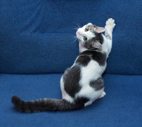 Erreichen, dass die Katze nicht auf das Sofa geht