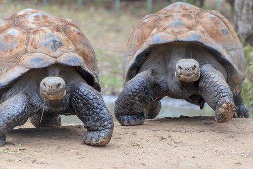 Fauna der Galapagos-Inseln