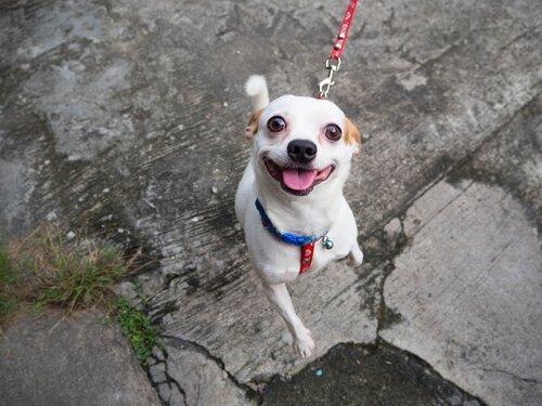 6 Tipps für mehr Spaß beim Gassi mit dem Hund