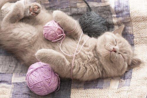 Glückliches Katzen Baby mit Wollknäuel