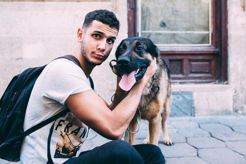 Gute Fotos von Haustieren machen