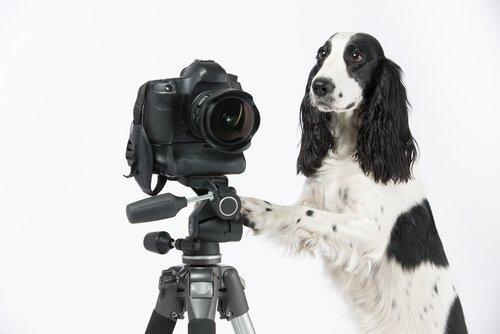 Gute Fotos von Haustieren mit einer Kamera machen