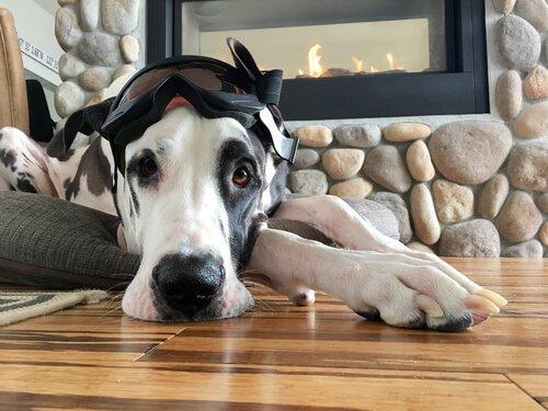 Haustiere für drinnen und draußen: Hund in der Wohnung