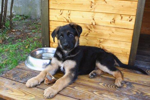Haustiere für drinnen und draußen: Hundehütte im Freien