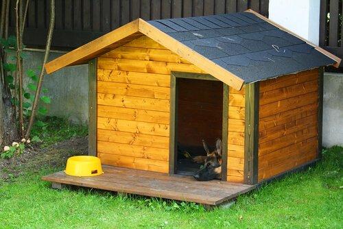 Haustiere für drinnen und draußen
