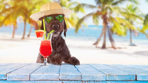 Hund mit Cocktail am Strand
