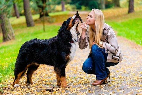 Hund und Bezugsmensch lieben sich
