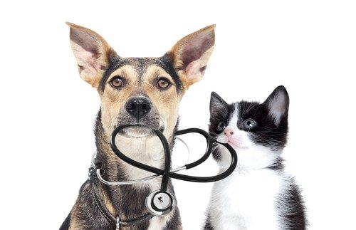 Hund und Katze mit Stethoskop