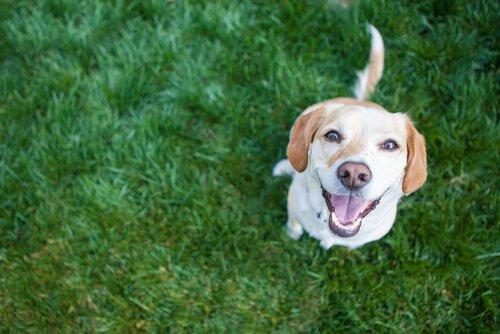 4 gesunde Gewohnheiten für das Hundeherz