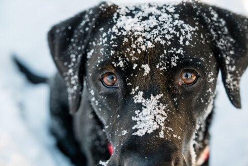 Hypothermie bei Hunden