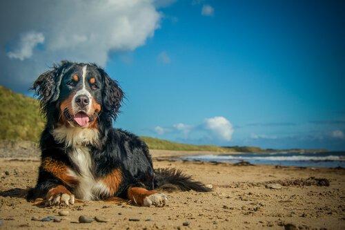 Infektionen beim Hund während der Sommerzeit