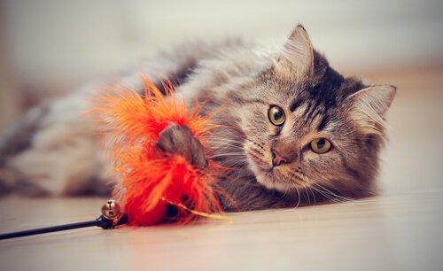 Katze alleine am Spielen