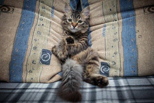 Katze nicht auf das Sofa lassen: So schaffst du es!