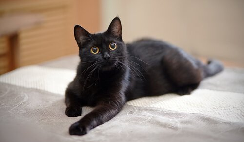 Katze nicht auf das Sofa lassen