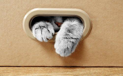 Katzen lieben Kartons: warum nur?