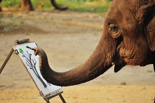 Malende Elefanten: Ist das Tierquälerei?