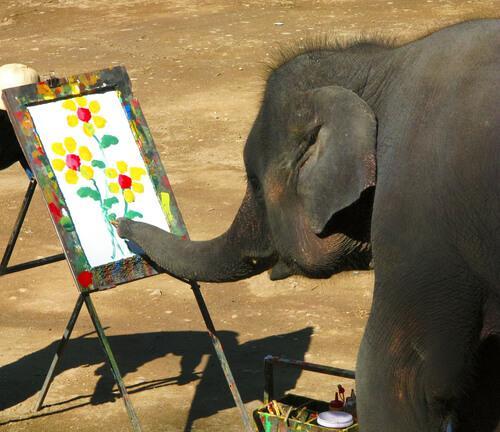 Malende Elefanten werden oft misshandelt.