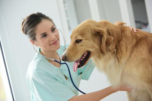Megaösophagus bei Hunden - Ursachen und Behandlung