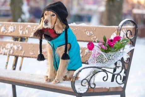 Mit Kleidung Hypothermie bei Hunden vermeiden