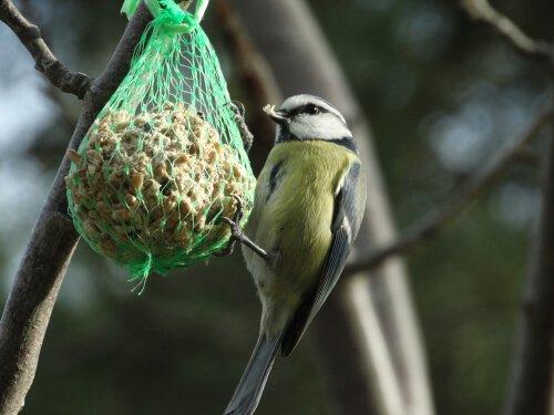 Mit Nahrung lockst du Vögel in deinen Garten