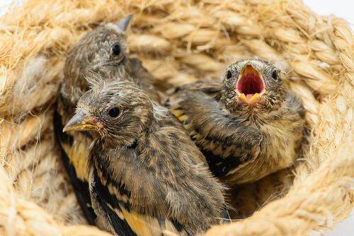 Mit Nestern lockst du Vögel in deinen Garten