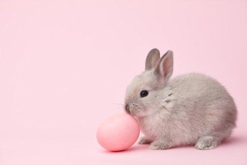 Namen für Kaninchen aus dem Fernsehen.