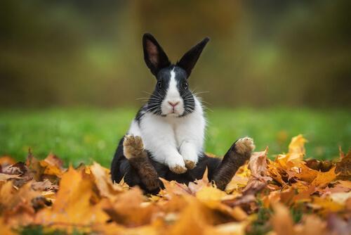 Originelle und kultige Namen für Kaninchen