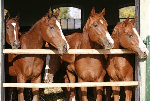 Pferdebox oder Offenstall: beides sollte sauber gehalten werden.