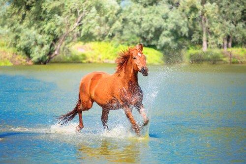 Pferdebox oder Offenstall: die Bewegung ist ein wichtiger Aspekt..